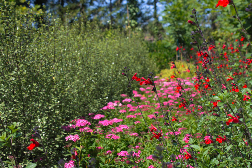 pepiniere-trenty-plantes-à-massifs